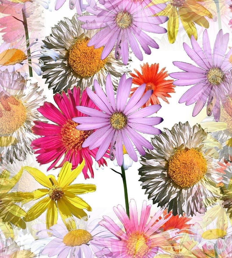 Gänseblümchen-nahtlose Fliese lizenzfreie stockbilder
