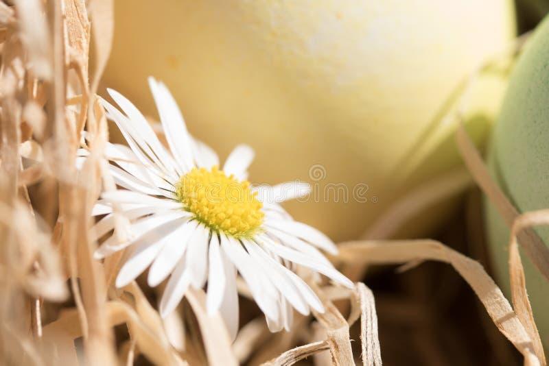 Gänseblümchen und easteregg stockfotos