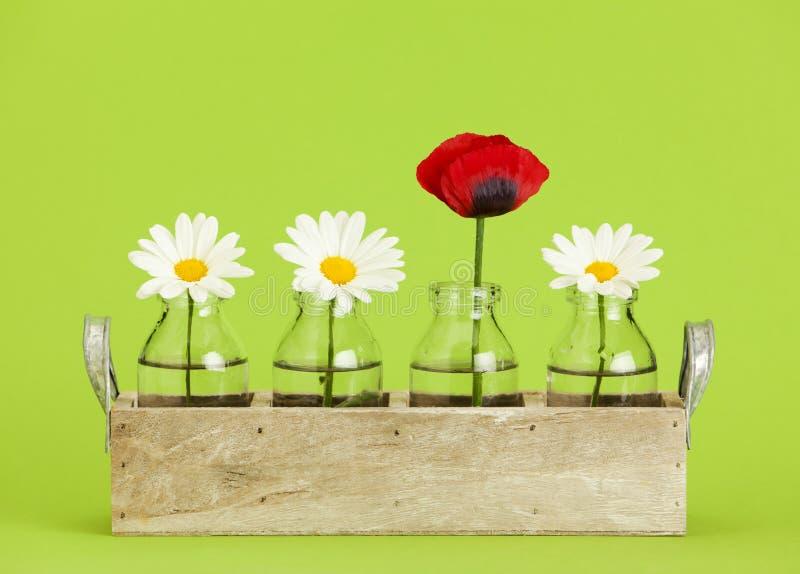 Gänseblümchen und Mohnblume blüht im Behälter mit kleinen Flaschen stockfotos