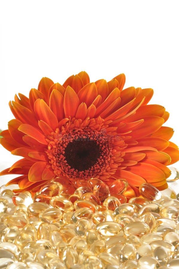 Gänseblümchen und Vitamin caplets stockfotos