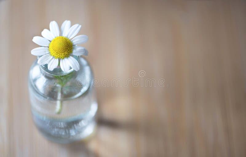 Gänseblümchenblume in einem transparenten GlasVase auf einem Holztisch, Abschluss oben, über Standpunktphotographie stockbilder