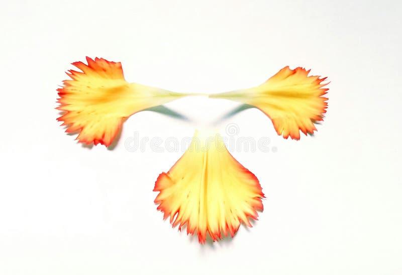 Gänseblümchenblumenblatt stockfotografie