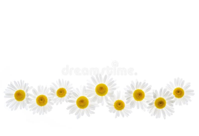 Gänseblümchenblumengrenze stockbild