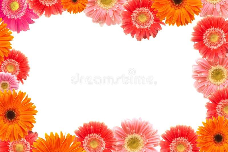 Gänseblümchenfeld stockbilder