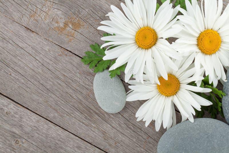 Gänseblümchenkamillenblumen und Seesteine lizenzfreie stockfotos