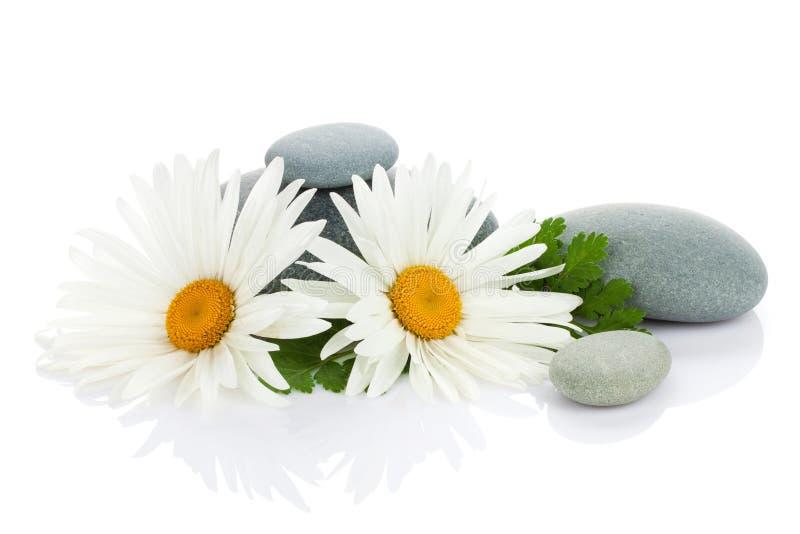 Gänseblümchenkamillenblumen- und -seesteine lizenzfreies stockfoto