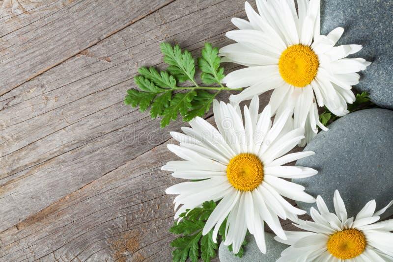 Gänseblümchenkamillenblumen- und -seesteine lizenzfreies stockbild