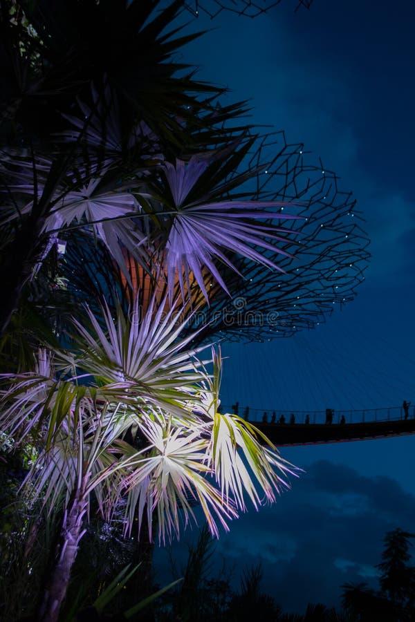 Gärten bis zum der Bucht@ Nacht stockfotos