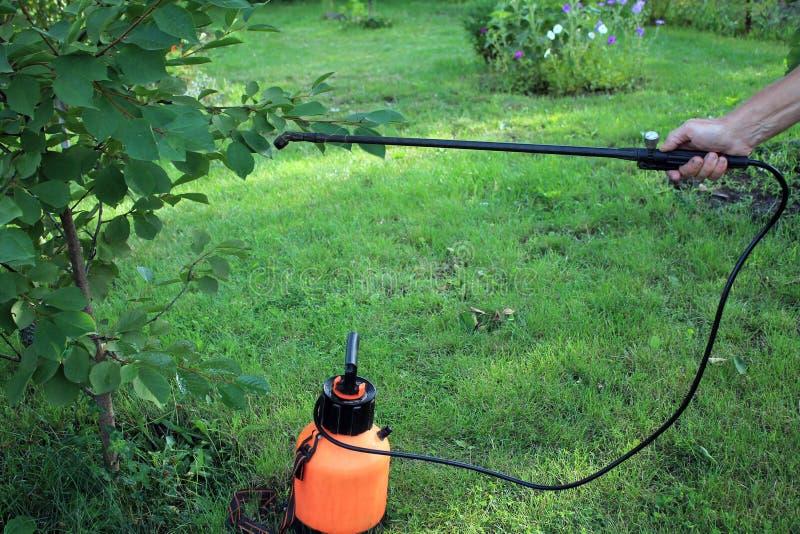 Gärtner besprüht Kirschbaum gegen Plagen und Krankheiten unter Verwendung stockbilder