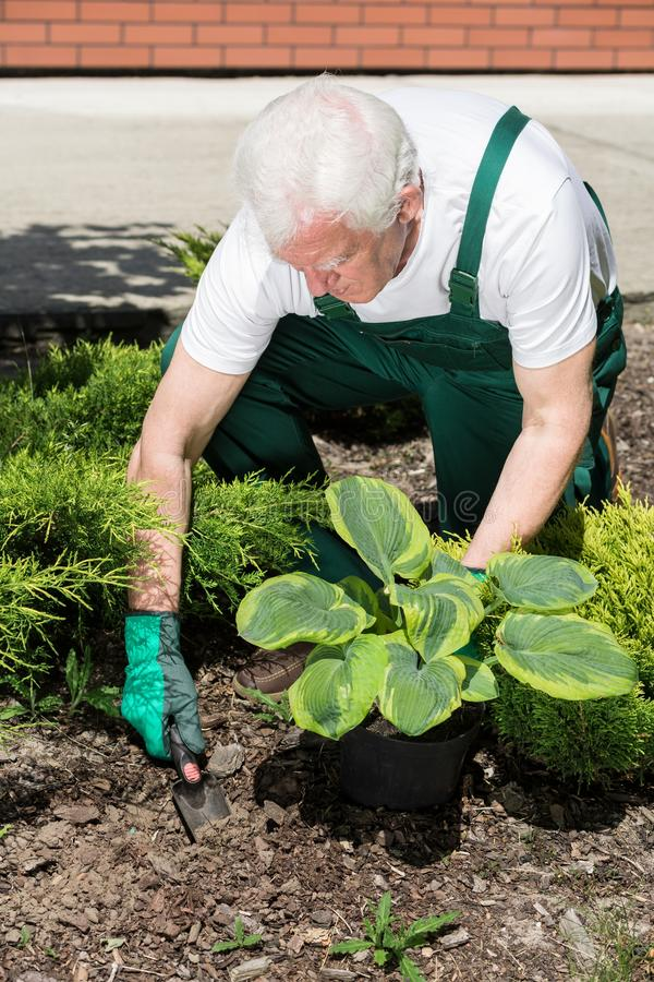 Gärtner, der Blume pflanzt lizenzfreies stockbild