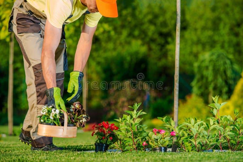 Gärtner, der Blumen pflanzt lizenzfreie stockfotos