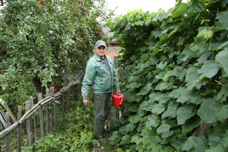 Gärtner, der den Garten wässert lizenzfreie stockfotografie