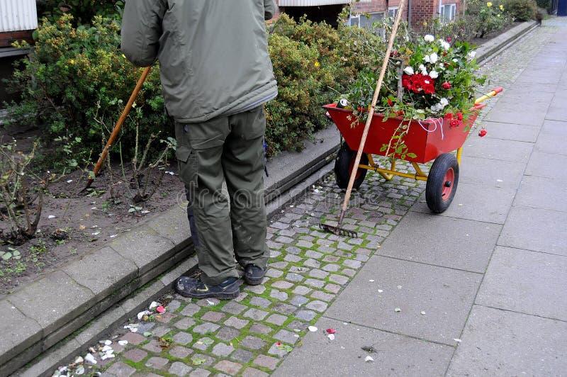 GÄRTNER, DER MIT ROSEN-ANLAGEN ARBEITET stockfotos