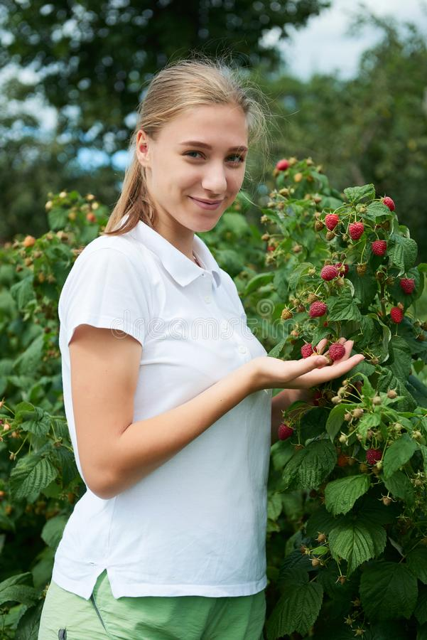 Gärtner des jungen Mädchens in weißer T-Shirt Versammlung eine Erntehimbeere stockfotos
