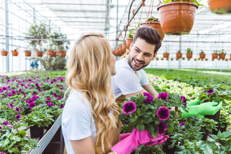 Gärtner, die Schutzhandschuhe tragen und blühende Blumen pflanzen lizenzfreies stockfoto