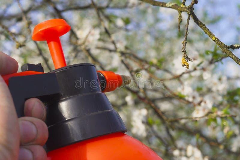 Gärtner mit dem Sprühen eines blühenden Obstbaumes gegen Pflanzenkrankheiten und Plagen Benutzen Sie Handsprüher mit Schädlingsbe stockbild