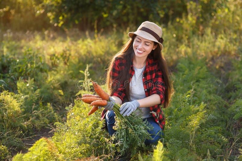 Gärtner mit Karotten in einem Gemüsegarten stockbild
