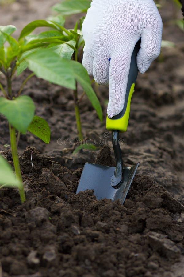 Gärtner mit Kelle lizenzfreie stockfotografie