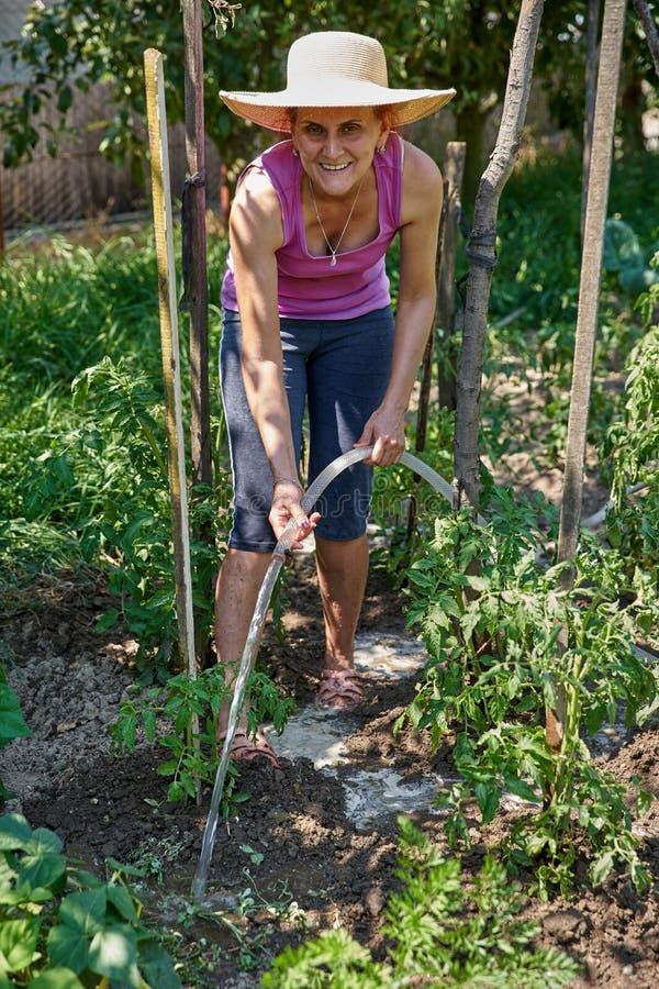 Gärtnerdame, welche die Anlagen wässert stockbild