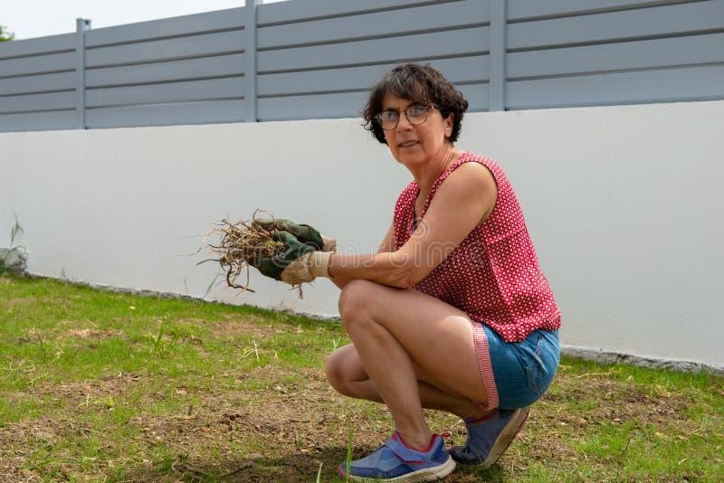 G?rtnerfrau, die Unkr?uter auf dem Rasen entfernt lizenzfreies stockfoto