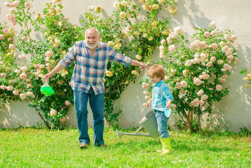 Gärtnern - Großvater Gärtner in sonniger Gartenanlage mit Rosen Gartenarbeit mit kleinen Kindern und Familien Seine lizenzfreies stockbild