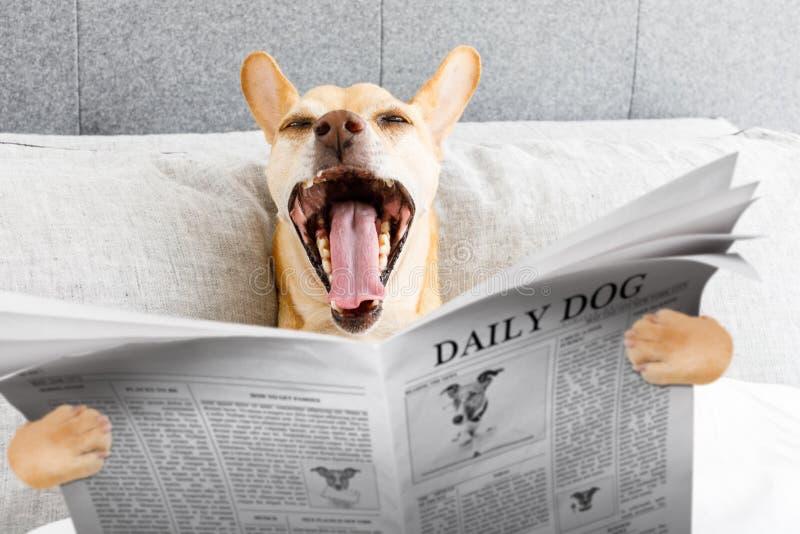 Gäspa hunden i säng royaltyfri fotografi