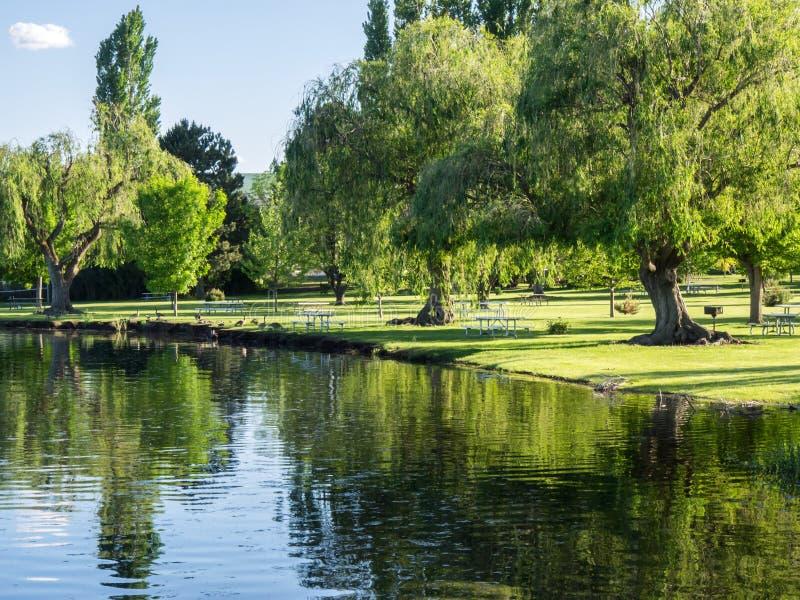 Gässen på gräsmatta på parkerar nära sjön arkivfoton