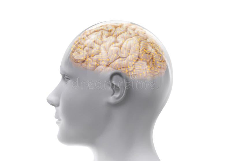 Głowa z mózg royalty ilustracja