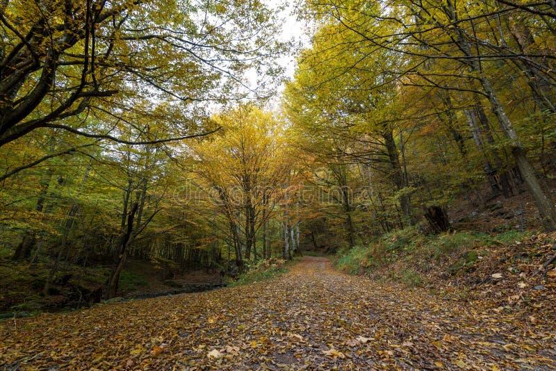 Gå banan i skog i nedgång i Bulgarien royaltyfria foton