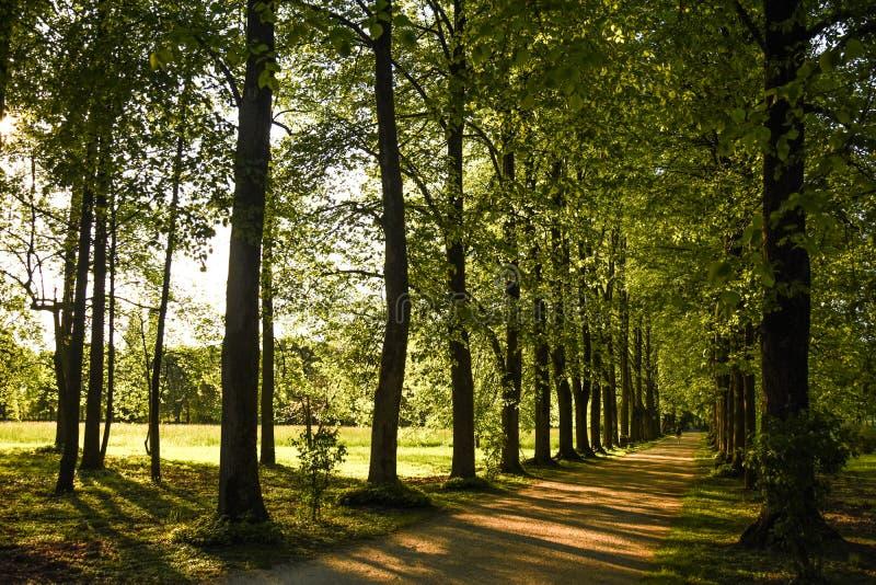 Gå bland träden fotografering för bildbyråer