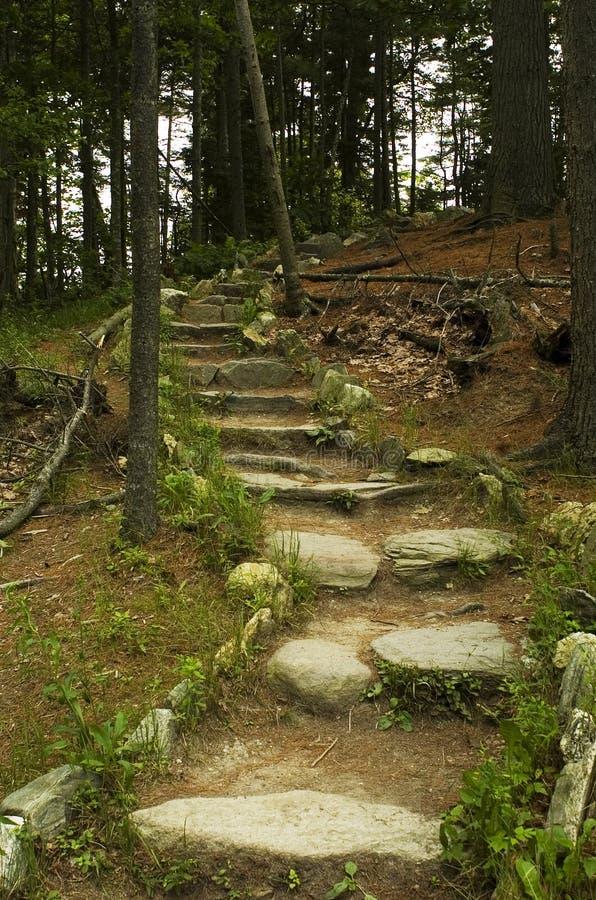 Download Gå För Bana Som är Skogsbevuxet Fotografering för Bildbyråer - Bild av trän, fotvandra: 992381