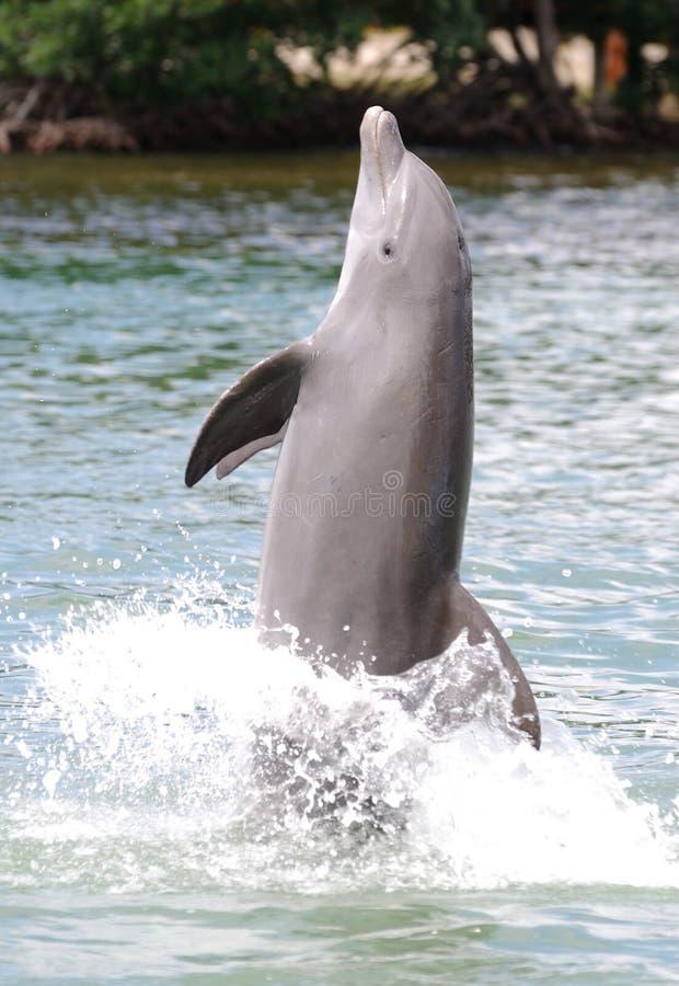 gå för delfinsvan arkivbild