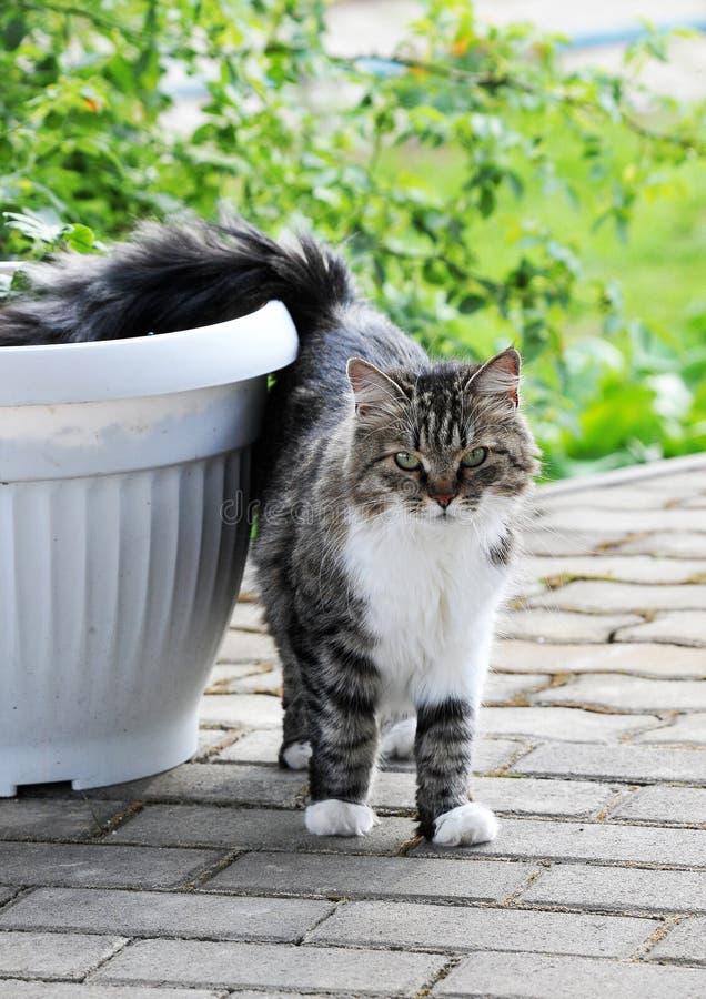 gå för katt royaltyfri bild