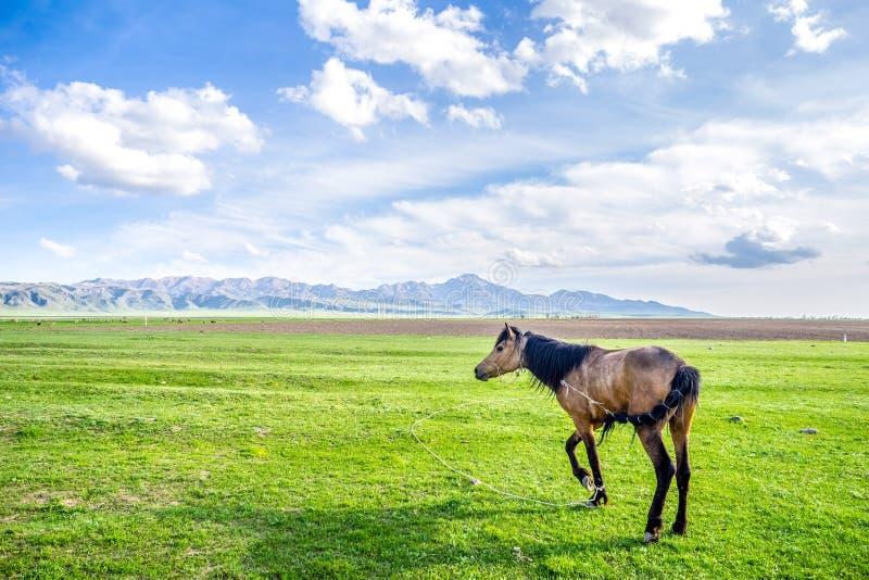 Gå hästen - landskap av det gröna fältet arkivfoto