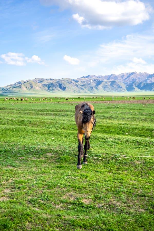 Gå hästen på en grön äng royaltyfria bilder