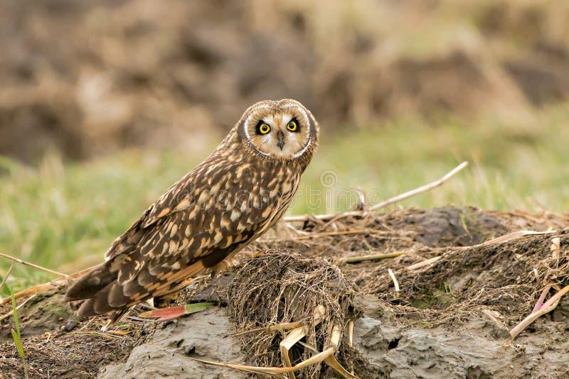 gå i ax owlkortslutning fotografering för bildbyråer