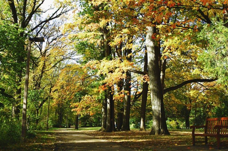 Gå i en parkera royaltyfri fotografi
