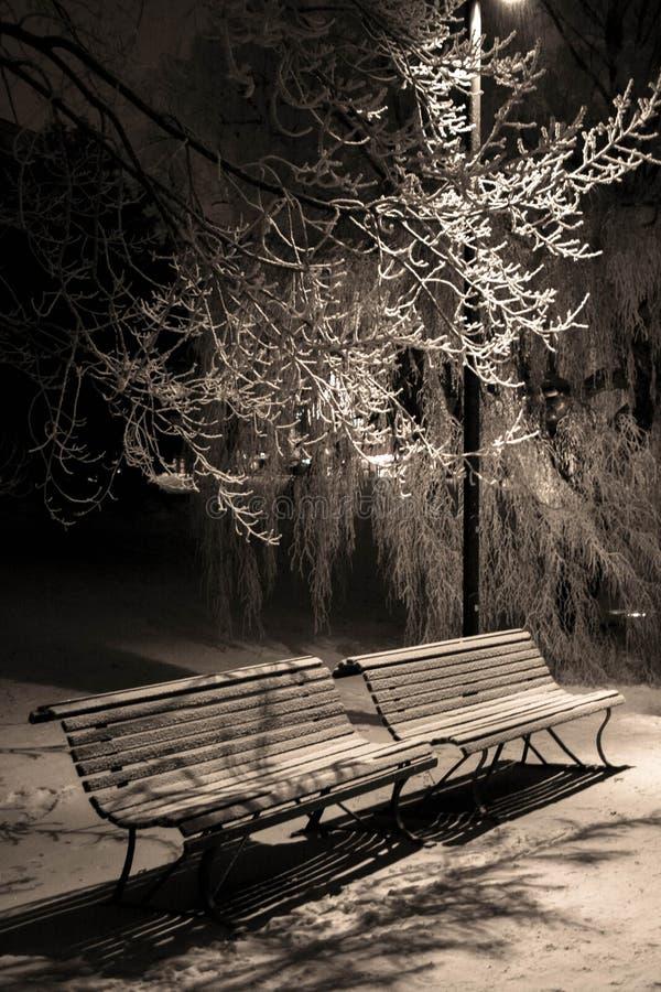 Gå i en parkera på en vinternatt arkivbild