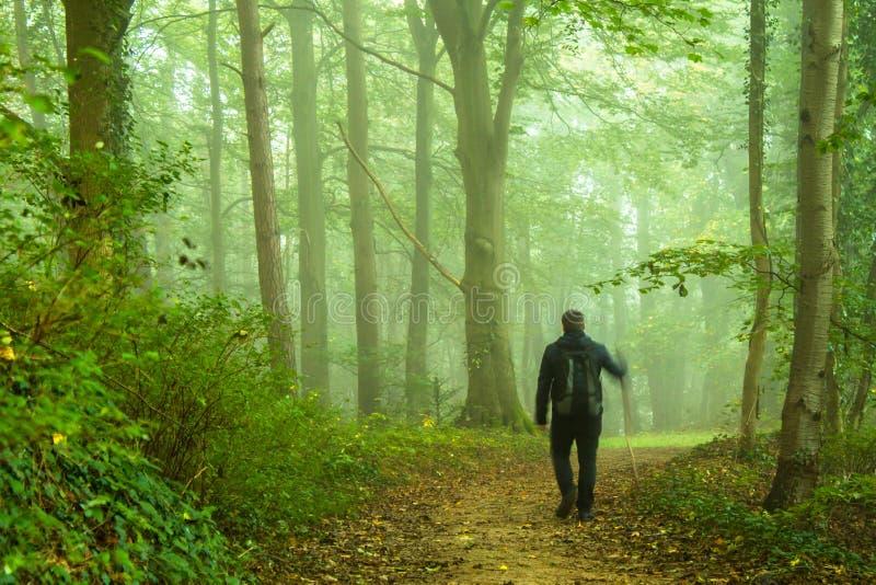 Gå i skog arkivfoton
