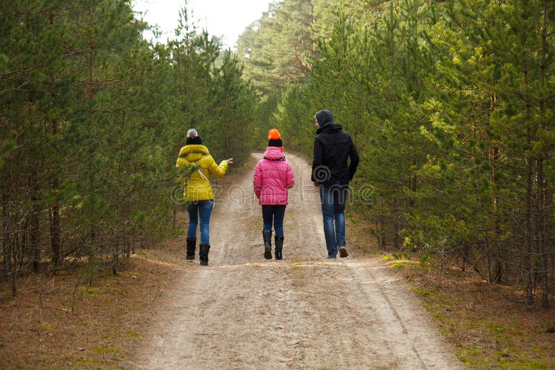 Gå i skog arkivfoto