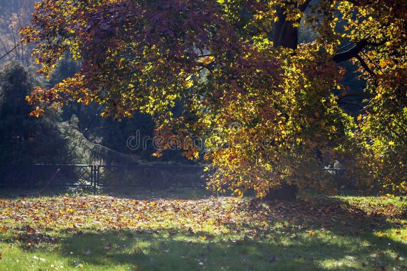 Gå i träna på en solig dag Guld- höst i skogen på en solig dag Gulingsidor på träd på en solig dag arkivfoton