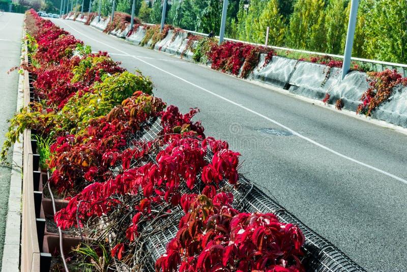 Gå med blommor på bron av den valladolid pisuergaen fotografering för bildbyråer