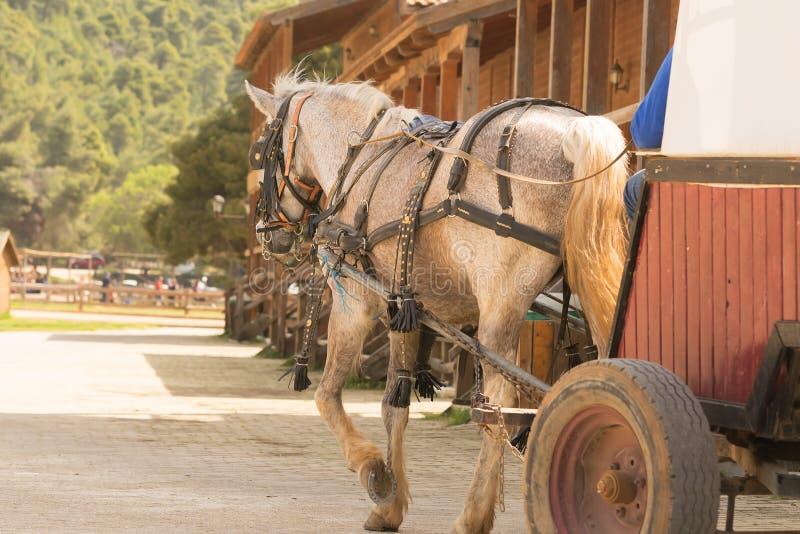 Gå med en hästlagledare på en ranch royaltyfri fotografi