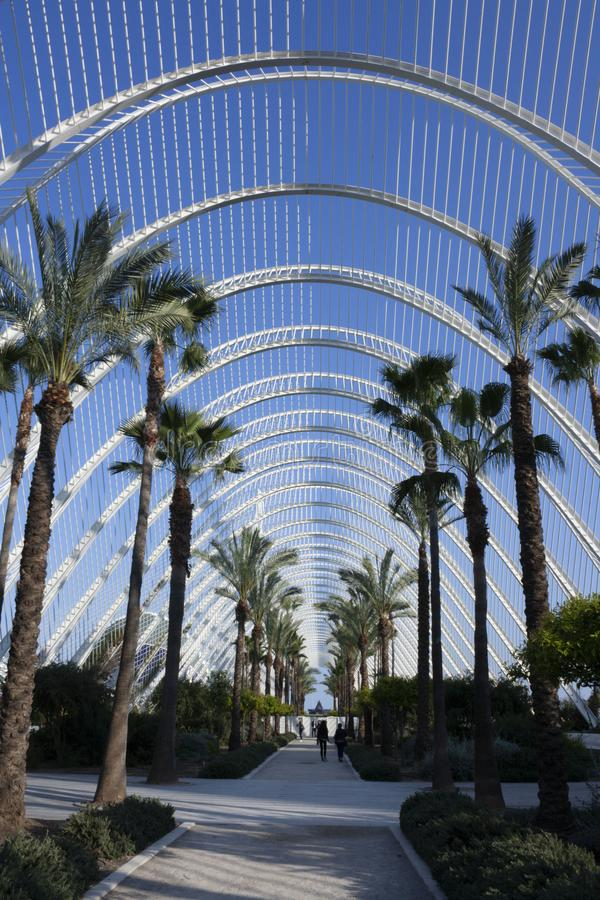 Gå med palmträd i Umbraclen av staden av konster och vetenskaper arkivbild