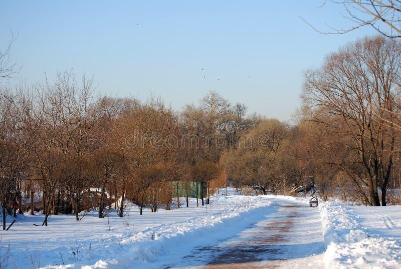 Gå på parkerar i frostig solig dag för vinter Yvess träd växer framåt mycket royaltyfri foto