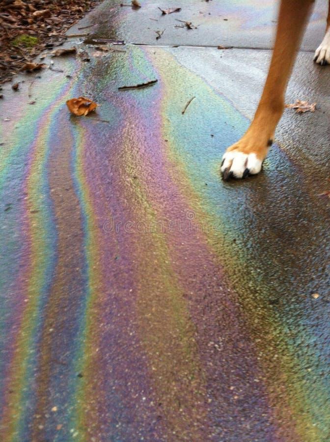 Gå på regnbågar arkivfoton