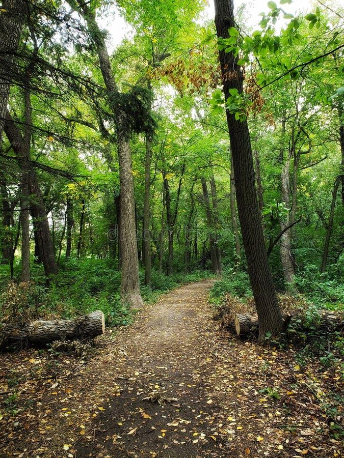 Gå slingan i skogen i Winnipeg, Manitoba arkivbilder