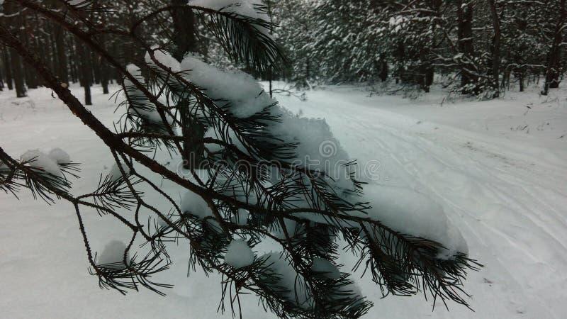 Gå som övervintrar skogräkningen en snö royaltyfri fotografi