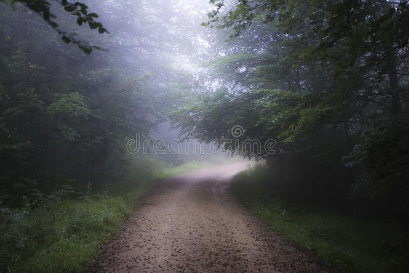 Gå till och med bokträdskog om dagen av dimma royaltyfri foto