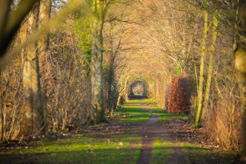 Gå till och med en höstskog royaltyfri fotografi